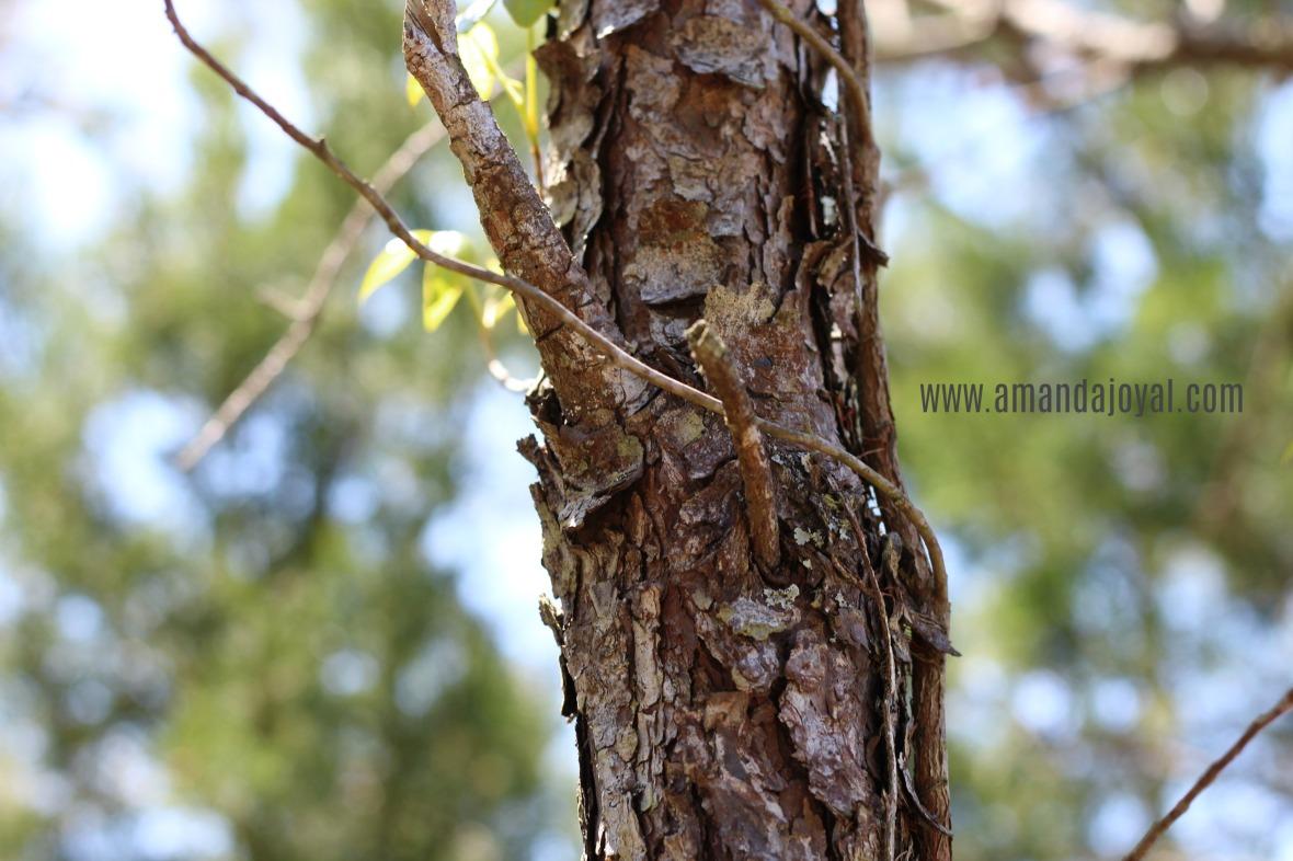 Tree NC