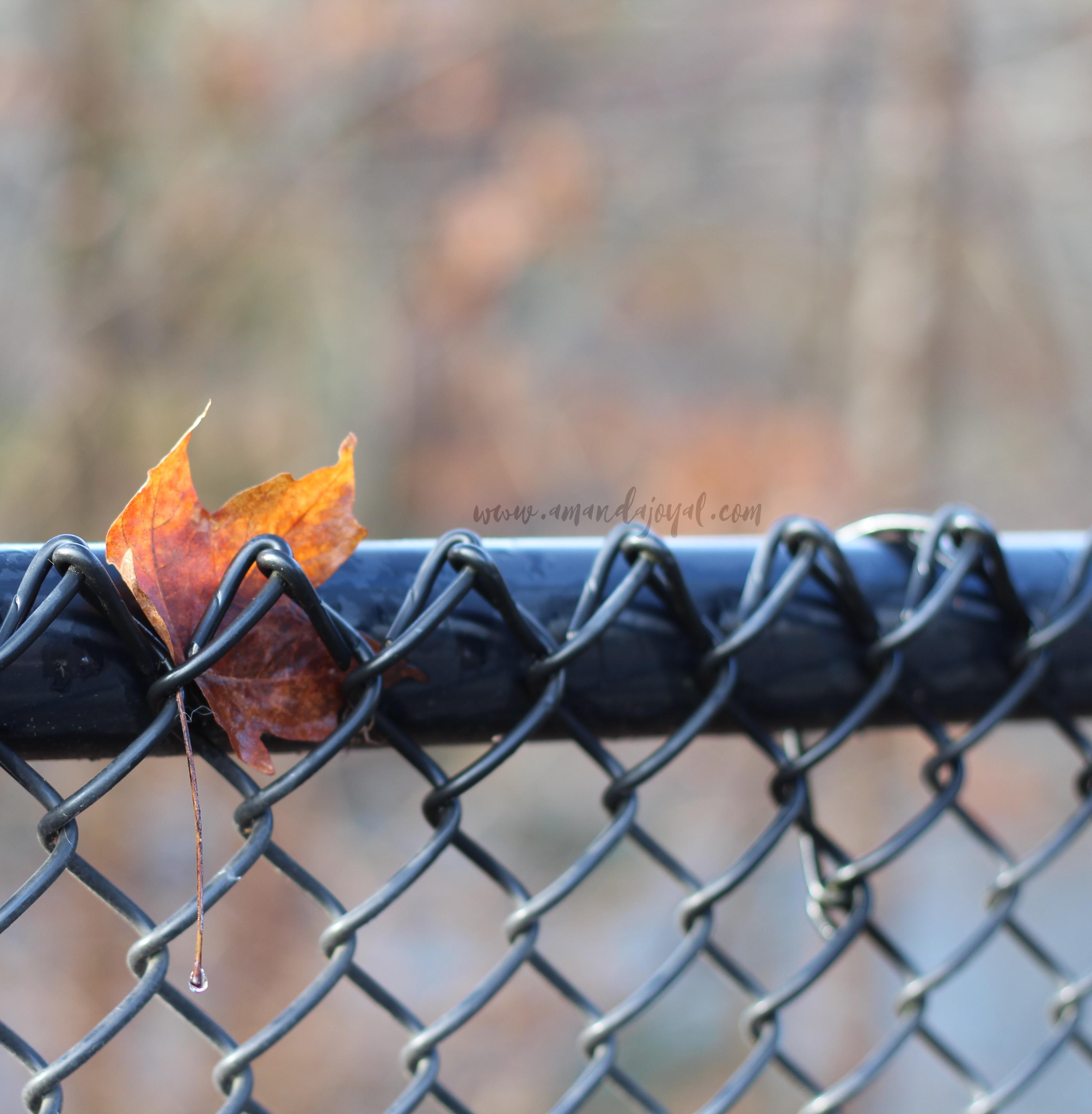 Leaf at Bulls Bridge